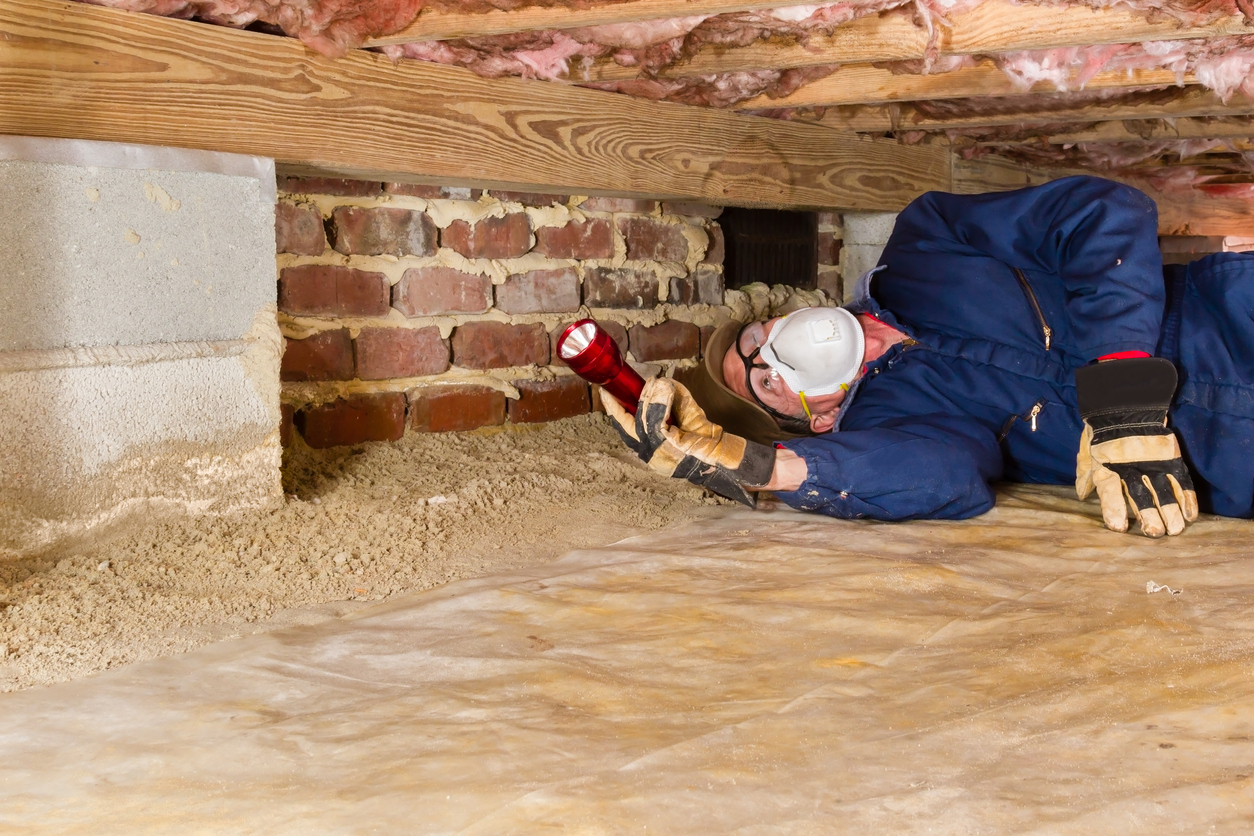 Termite Exterminator Florence, SC