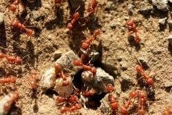 Fire Ant Exterminators