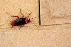 roach-exterminator